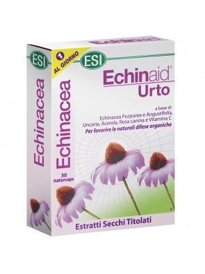 Echinaid Urto 30cpr